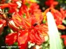 çiçek makro