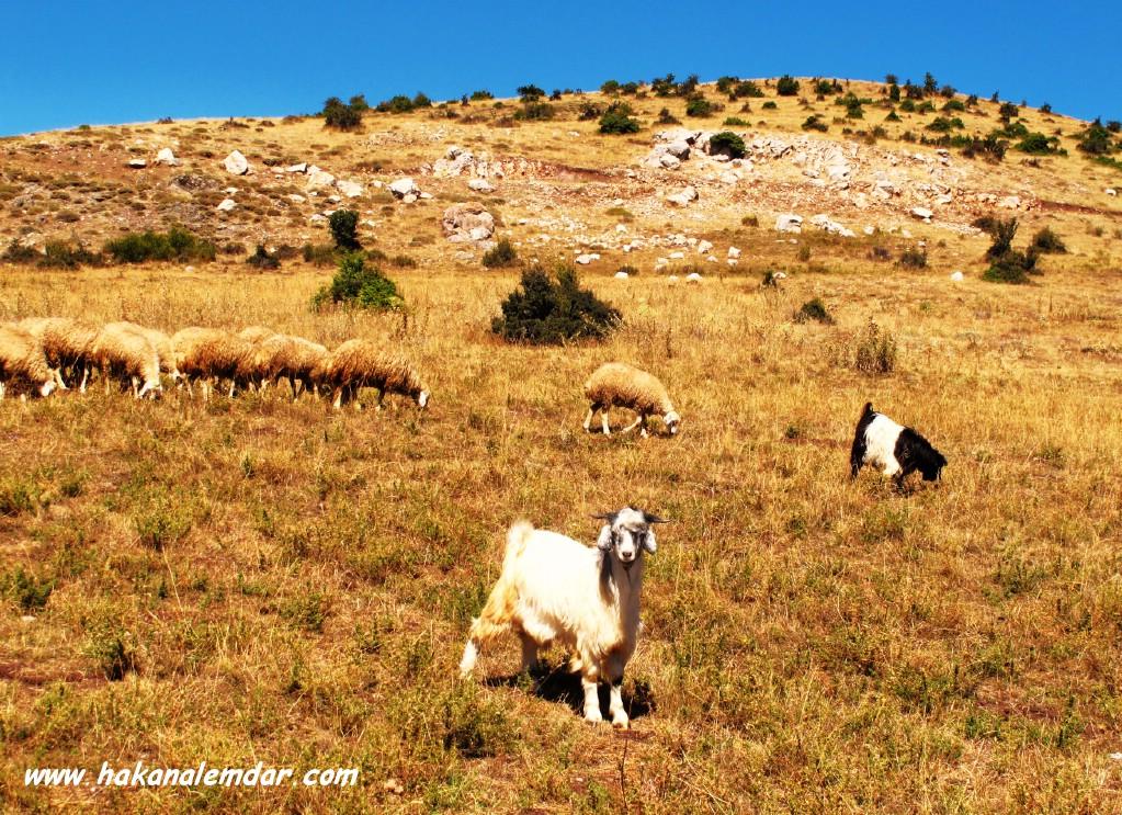 Çankırı Şabanözü Köylerinden