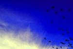 Bafra kuş cenneti