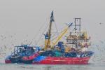 Kireçburnu Balıkçı Teknesi