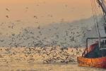 Kireçburnu balıkçı teknesi ve martılar