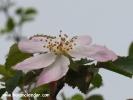 Şile bitkiler ve doğa