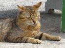 Şile hayvan resimleri - kedi