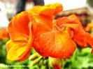 hakanalemdar-bahar-cicek-0050