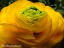 hakanalemdar-bahar-cicek-0073